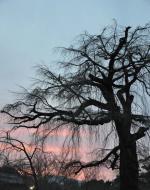 foto van Germain Droogenbroodt: De boom ontstaat door de wind - kioto